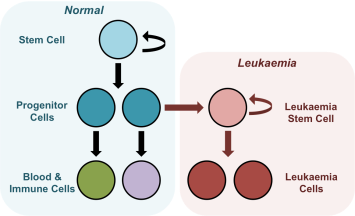 diagram image Zahra